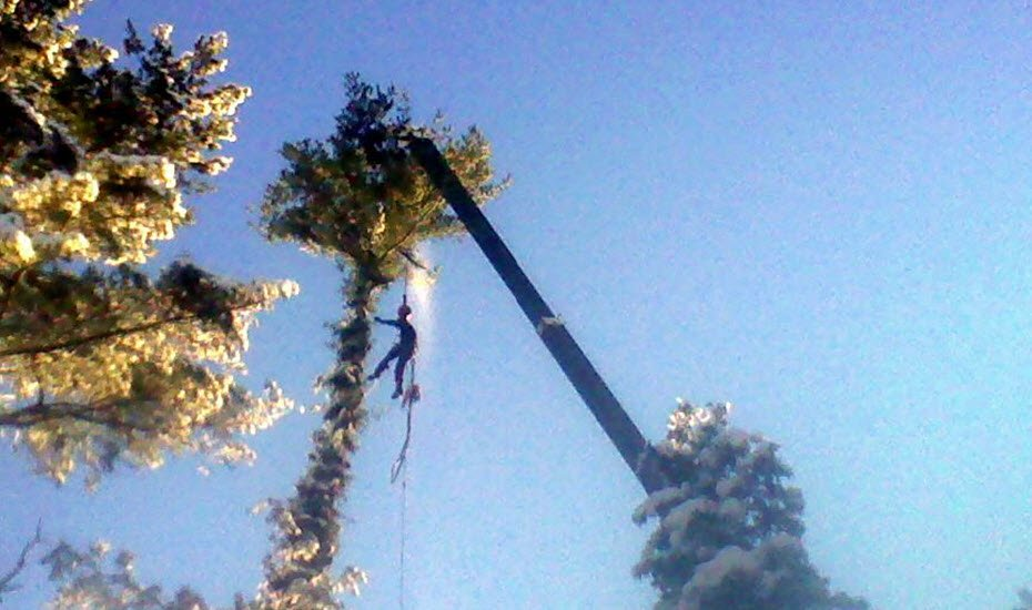 Tree Removal - Fox Tree Care Services - Enfield NH